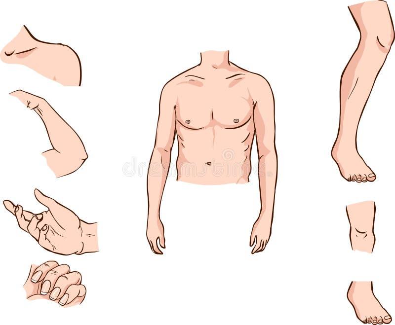 Miembros ilustración del vector