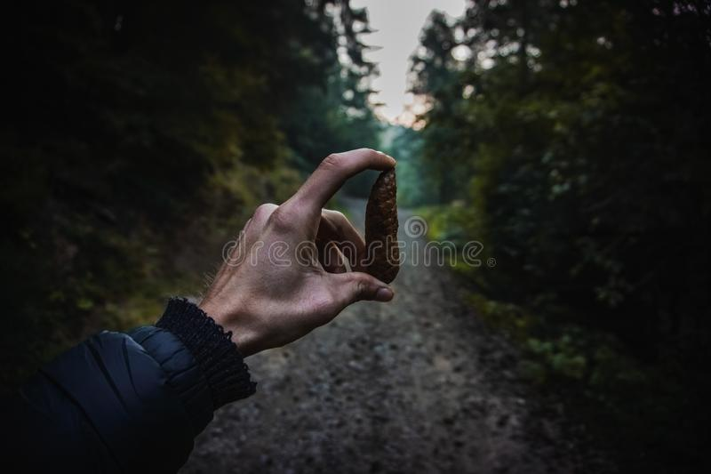 Mienia pinecone zdjęcia stock