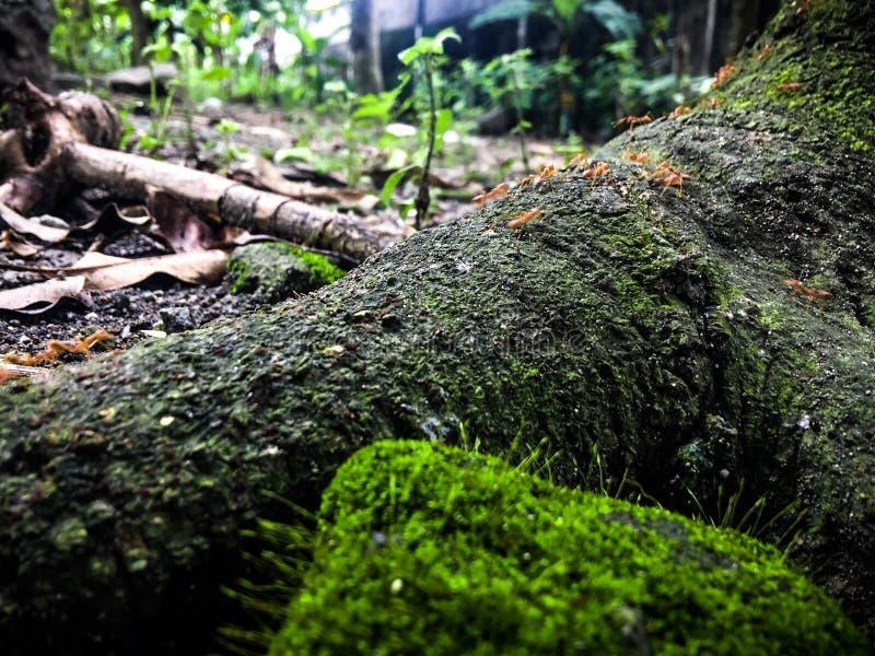 Mier, hout, en steen stock foto's