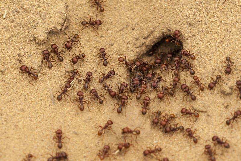 Mieren bij Mierenhoop royalty-vrije stock fotografie