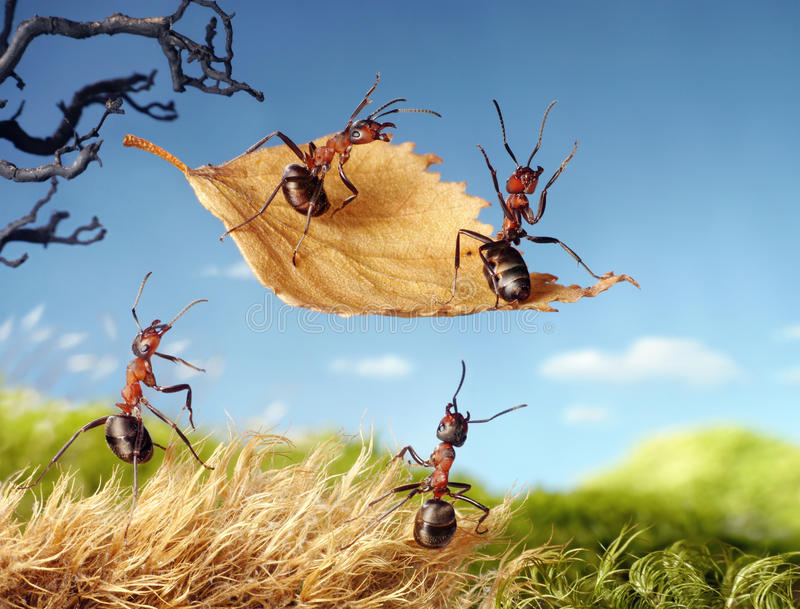 Mieren die op blad, mierenverhalen vliegen stock foto