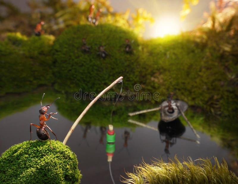 Mieren die op zonsopgang, mierenverhalen vissen stock afbeeldingen