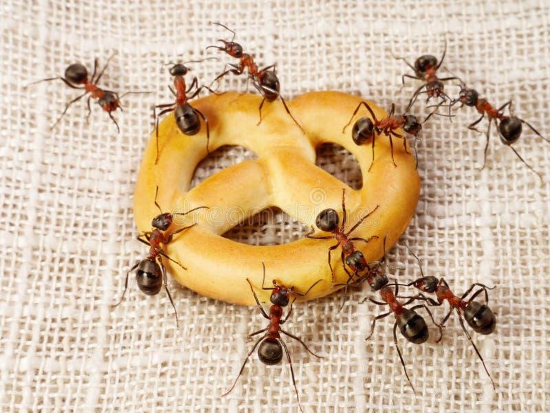 Mieren die probleem van cakevervoer oplossen, groepswerk stock afbeelding