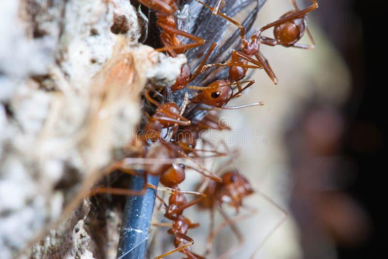 Mieren het lopen stock fotografie
