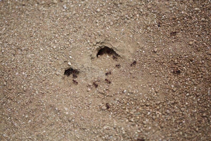Mieren het marcheren stock foto