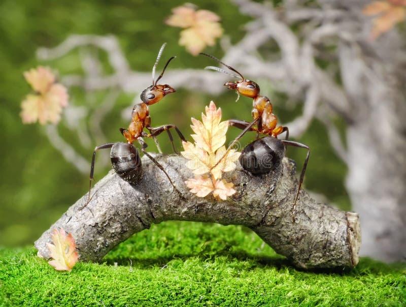 Mieren op bank in het park, fairytale stock afbeelding