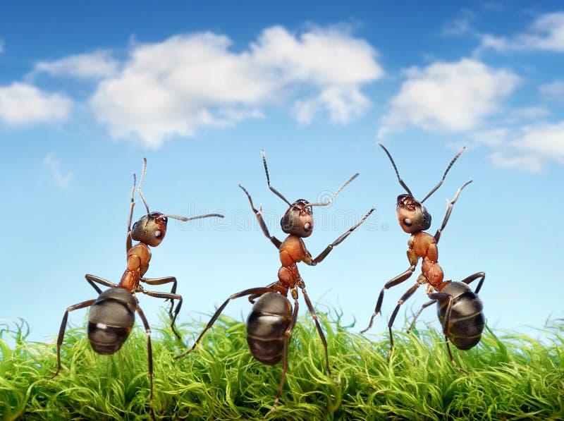 Mieren op gras royalty-vrije stock afbeeldingen