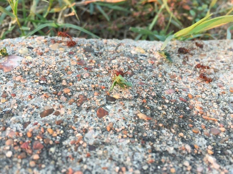 Mieren op het werk royalty-vrije stock foto's