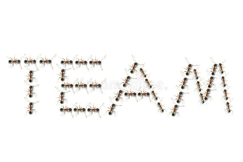 Mieren in teamtekst stock afbeeldingen