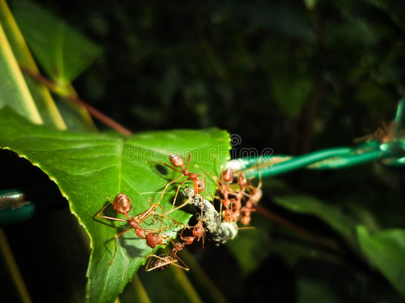 Mieren werktijd stock fotografie