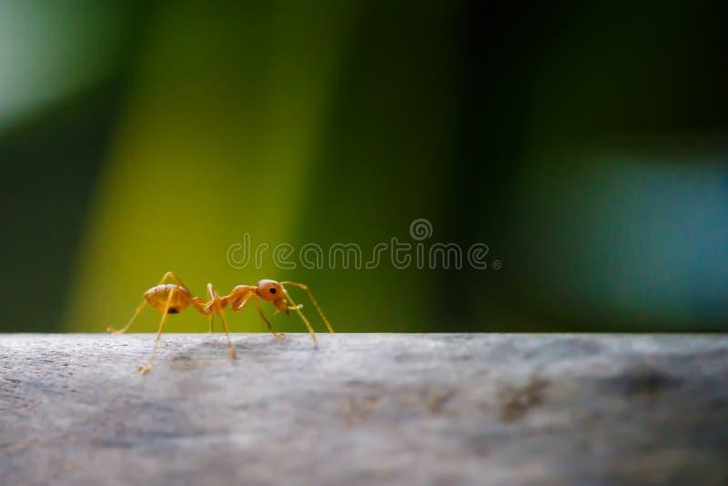 Mierengang op takken stock foto's