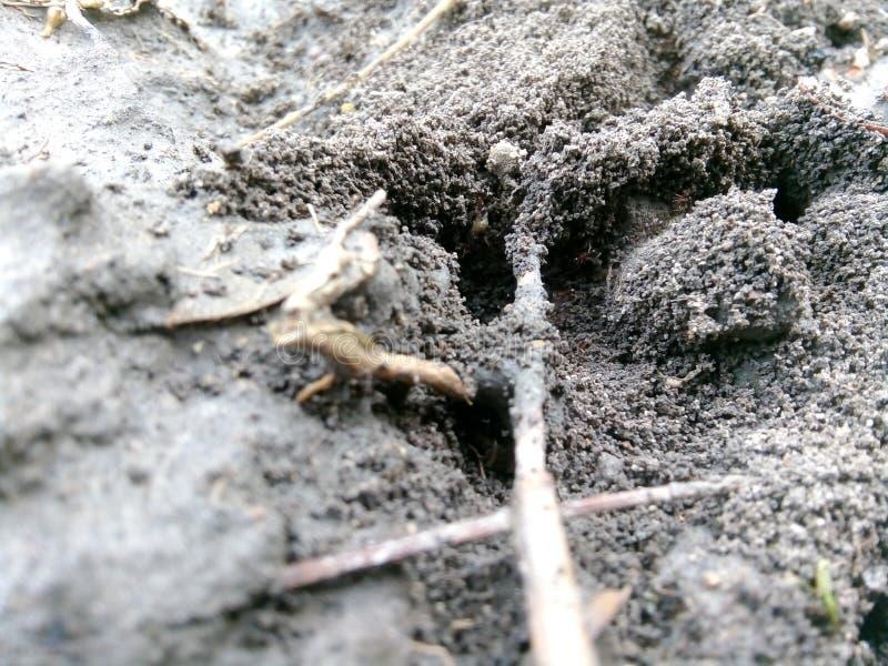 Mierenhuis stock foto