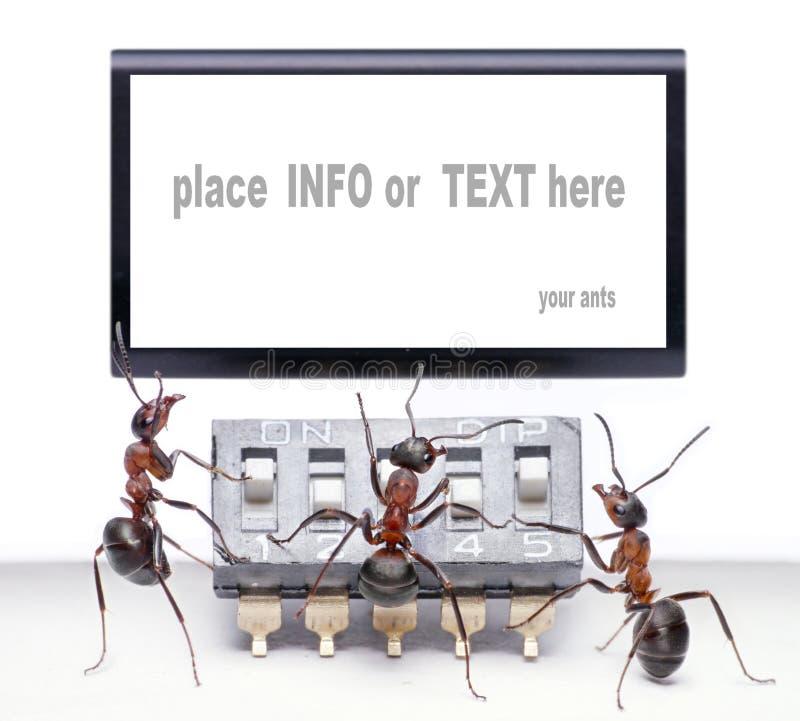 Mierenmonitor en spatie voor tekst royalty-vrije stock afbeelding
