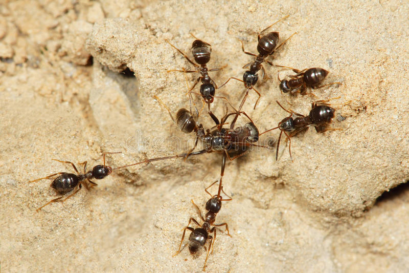 Mierenoorlog royalty-vrije stock afbeeldingen
