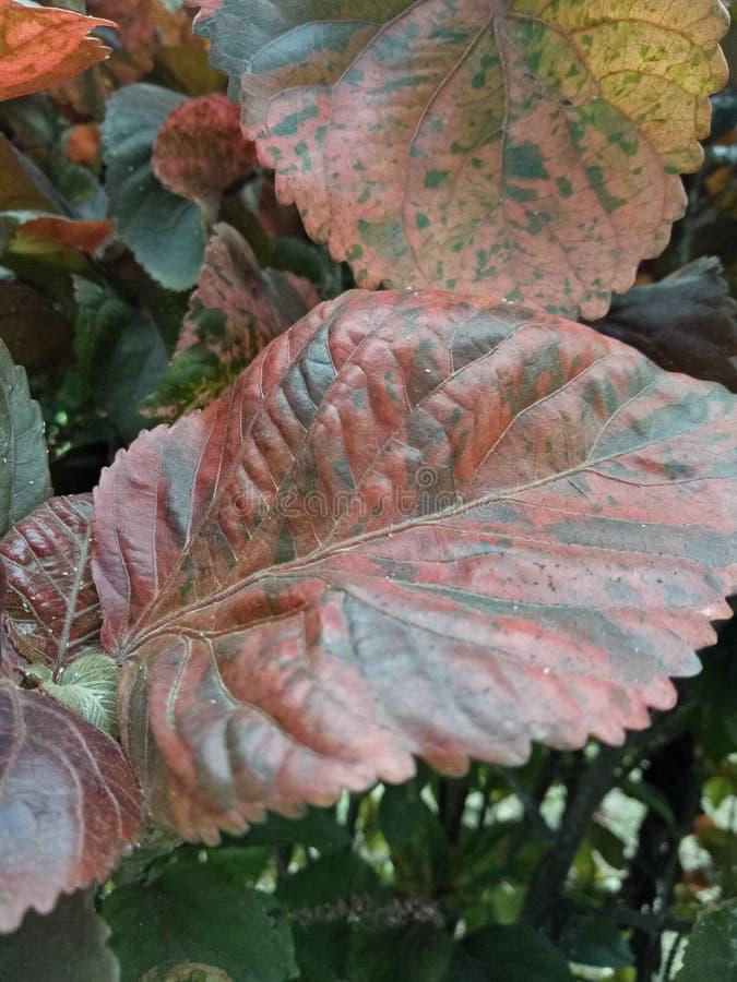 2 mieszający coloured liść zdjęcia stock
