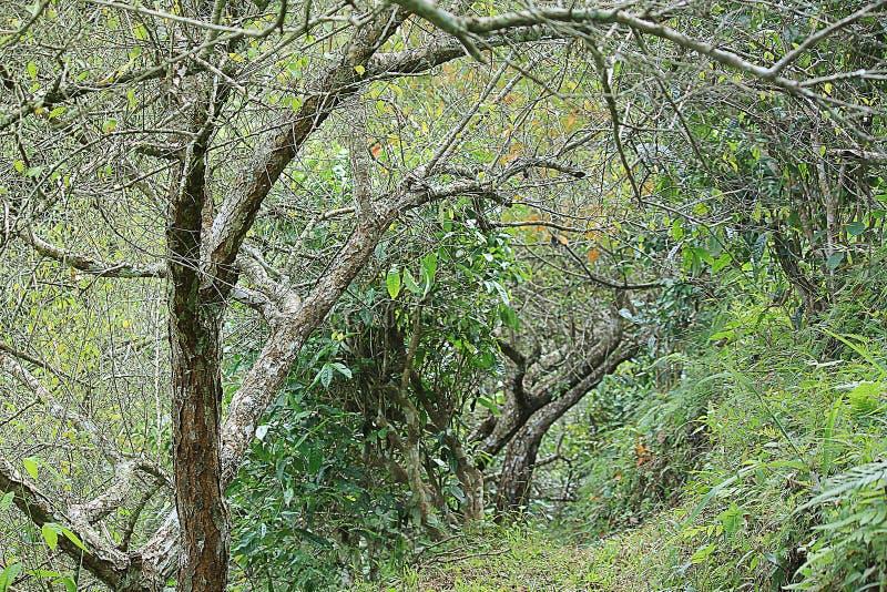 Mieszana uprawia ziemię harmonia z naturą obrazy royalty free