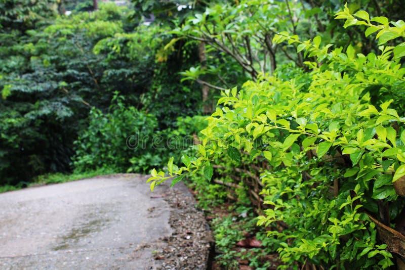 Mieszana uprawia ziemię harmonia z naturą obraz royalty free