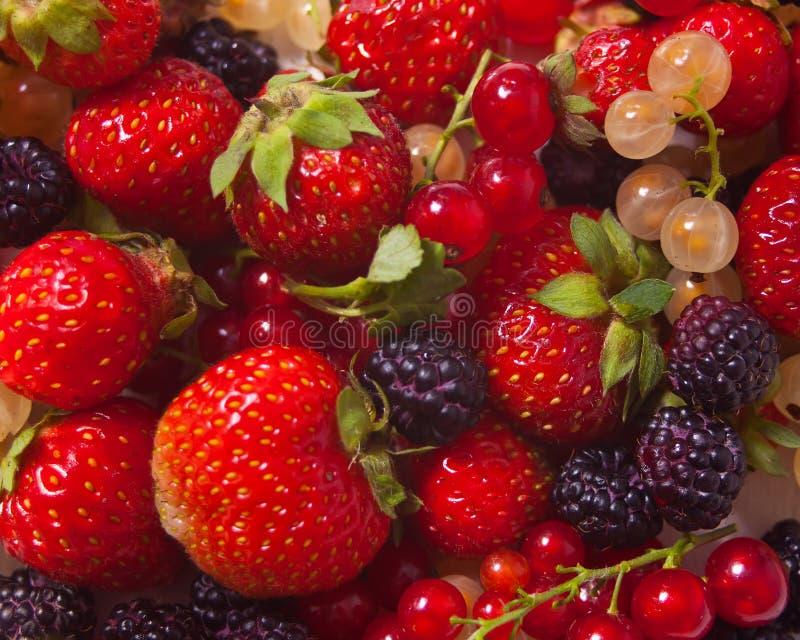 Mieszane jagody jako tło Czernic, czerwieni i białego rodzynek, truskawkowy tekstura wzór obraz stock