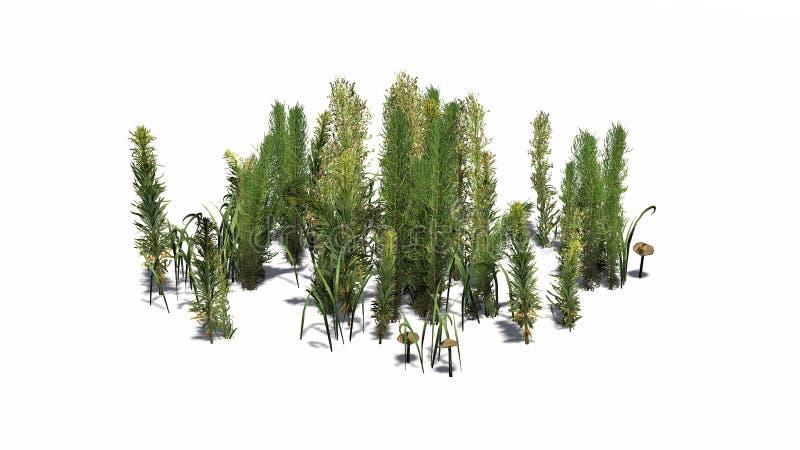 Mieszane zielenie różne zielone rośliny i brudno- pieczarki - ilustracji
