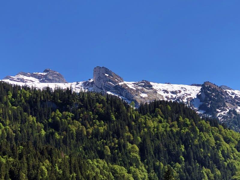 Mieszani lasy i śnieżni wysokogórscy szczyty nad doliną Wagital, Waegital lub sztuczny halny jeziorny Wagitalersee fotografia stock