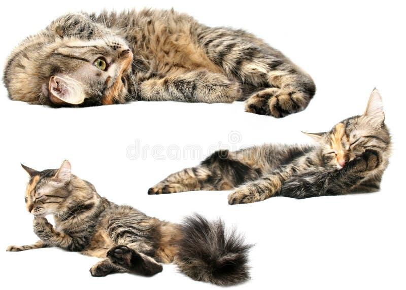 mieszankę kota zdjęcie royalty free