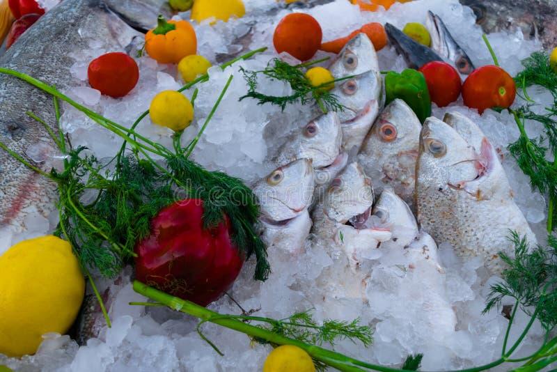 mieszanka różna ryba w kostkach lodu z czerwienią, zielenią, pomarańczową papryką, pomidorami, wapnem, cytryną i koperem w stole, obraz royalty free