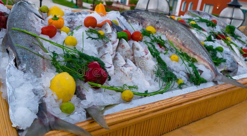 mieszanka różna ryba w kostkach lodu z czerwienią, zielenią, pomarańczową papryką, wapnem, cytryną i koperem, zdjęcia royalty free