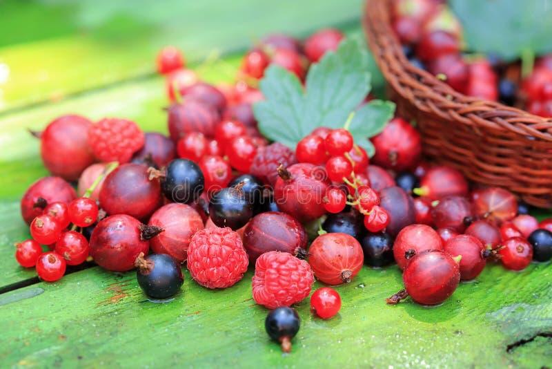 Mieszanka różne lato jagody na drewnianym tle obraz royalty free