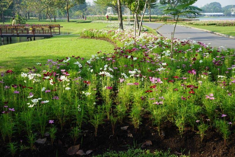 Mieszany kolor stokrotka kwiaty zdjęcie stock