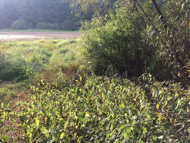 Mieszany las przy lato słonecznym dniem, piękny krajobraz obrazy stock