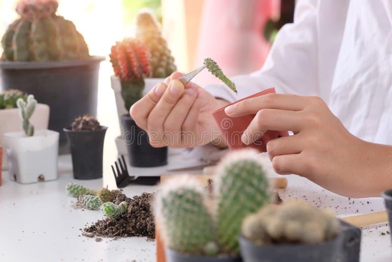 Mieszany ogrodnictwo Kobieta robi hobby ogródu rolnictwu i reprodukuje kaktusa na garnku rozkrzewia obrazy stock
