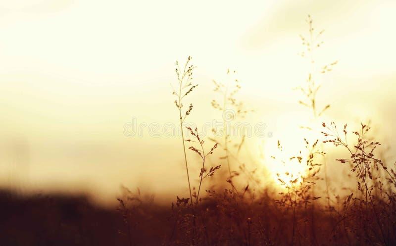 Mieszany złoty światło od zachodu obraz stock