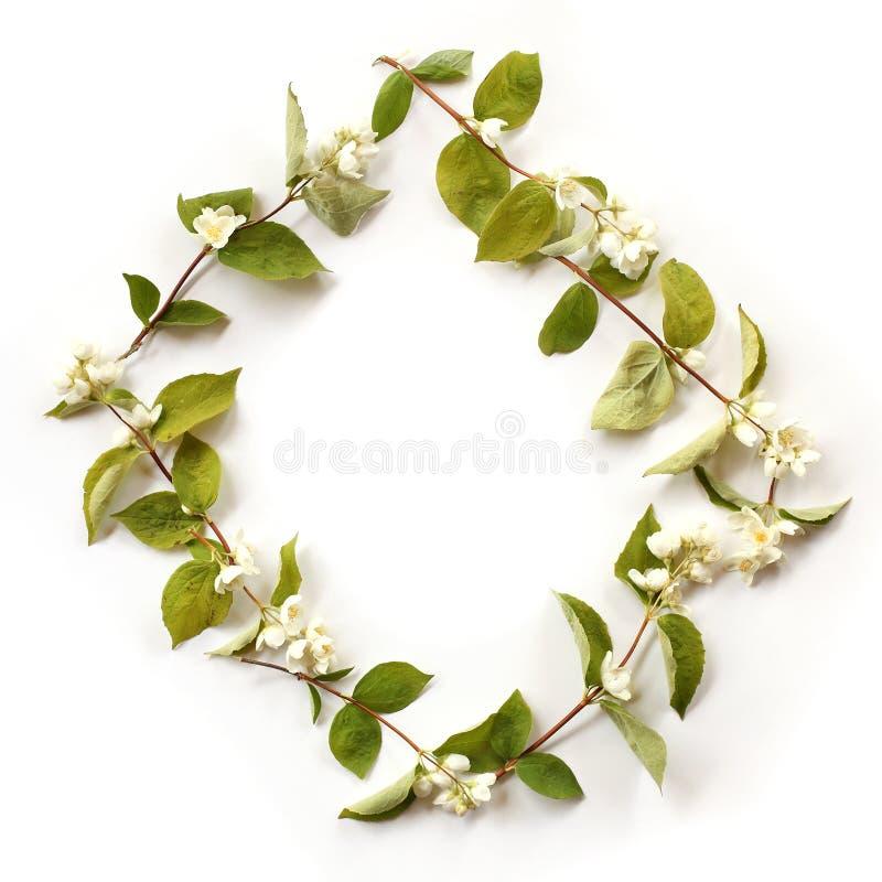 Mieszkanie granicy nieatutowa rama z białymi jaśminów kwiatami, pączki fotografia stock
