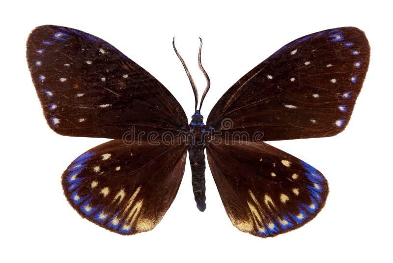 mieszkanie motyli zygzag zdjęcie stock
