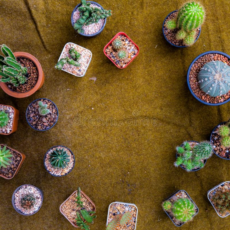 Mieszkanie nieatutowy lub odg?rny widok r??ni typy pi?kny kaktus na rocznik kanwie zdjęcia royalty free