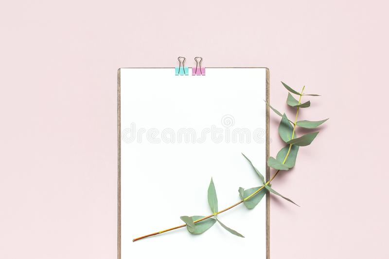 Mieszkanie nieatutowy schowek z pustym papierem, zielony eukaliptus rozgałęzia się na pastelowych menchii tle Odgórnego widoku że obrazy royalty free