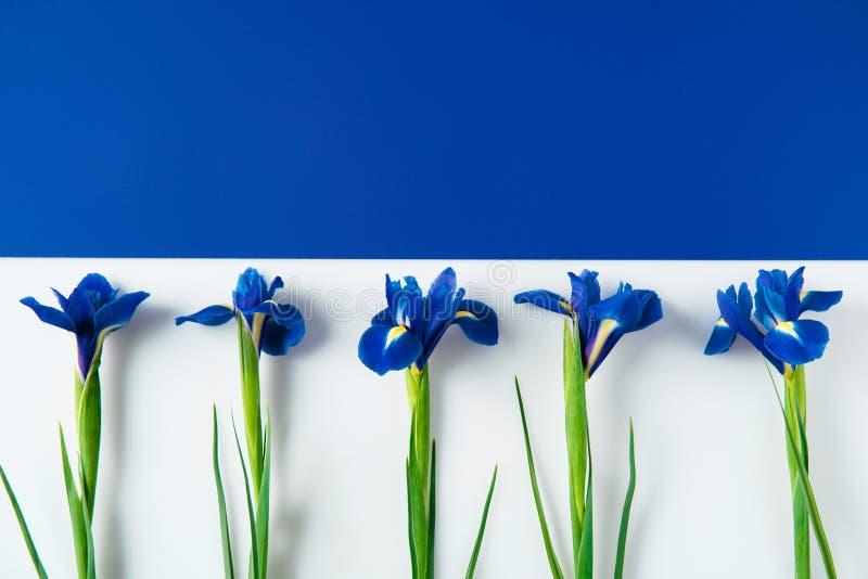 mieszkanie nieatutowy skład irys kwitnie na przekrawającym błękicie zdjęcie stock