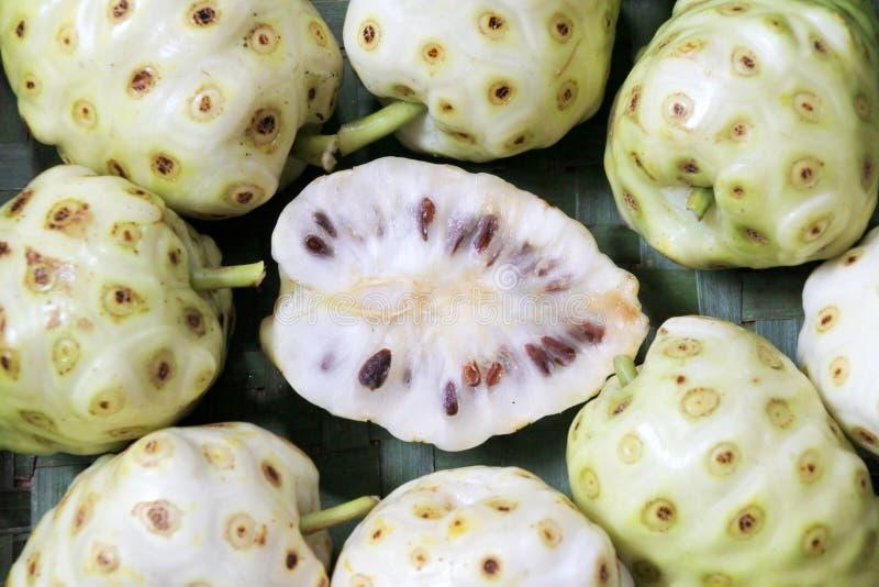Mieszkanie nieatutowy widok Serowa owocowa Noni owoc w Rarotonga Cook Islan zdjęcia stock