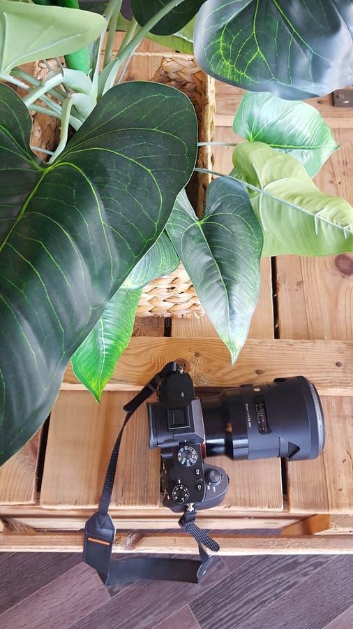 Mieszkanie nieatutowy zielony liść, kamera Odg?rnego widoku podr?? lub wakacje poj?cie Lata t?o zdjęcie royalty free