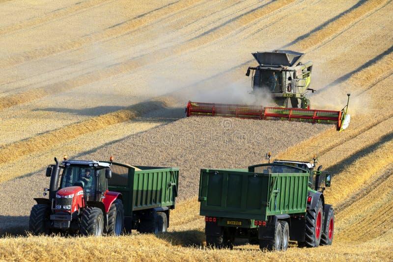 Mietitrebbiatrice - agricoltura - coltivare fotografie stock libere da diritti