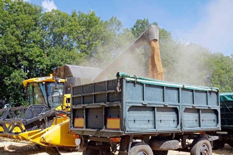 Mietitrebbiatrice che scarica il grano del grano nel camion fotografia stock
