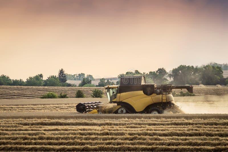 Mietitrebbiatrice che taglia grano, paesaggio di estate fotografia stock