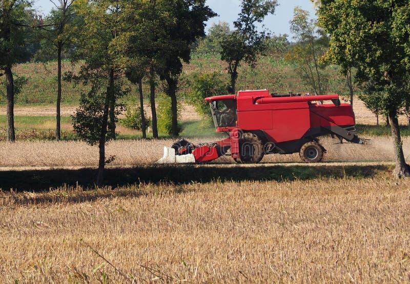 Mietitrebbiatrice rossa su un giacimento della soia nei primi giorni dell'autunno fotografia stock