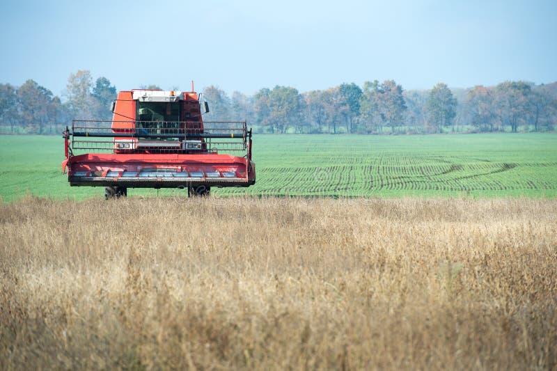 Mietitrice dell'agricoltore che raccoglie un campo della soia fotografie stock