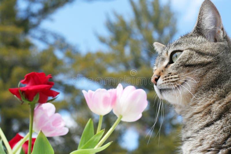 Miezekatze, Die Ihren Garten Genießt Lizenzfreies Stockfoto