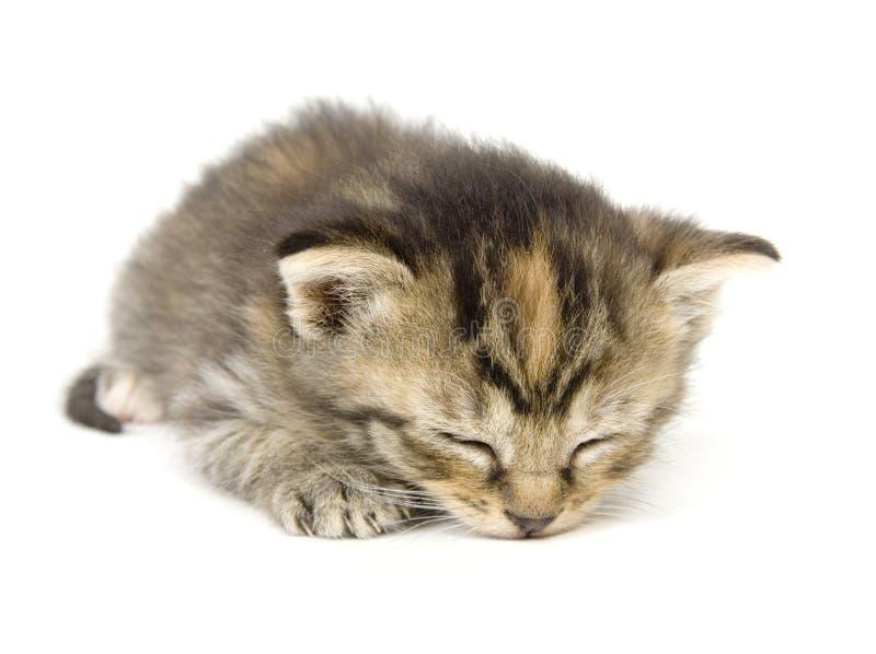 Miezekatze, die Katze auf weißem Hintergrund ein Schlaefchen hält stockfotografie
