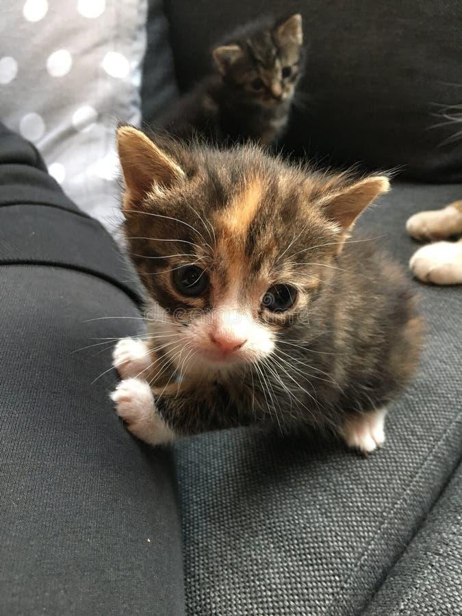 Miezekatzen - wenig Schönheiten stockfoto