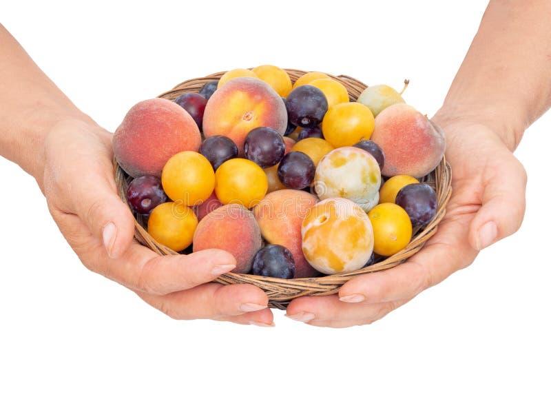 Mig med gammalmodig frukt från en lång övergiven fruktträdgård Mycket små gula plommoner, krikon, renklor och litet som är söta royaltyfri bild