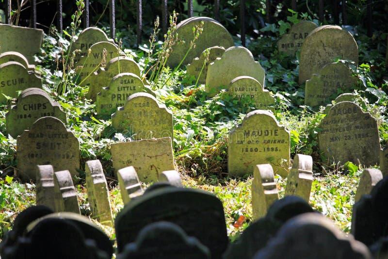 Migdali cmentarz zdjęcia royalty free