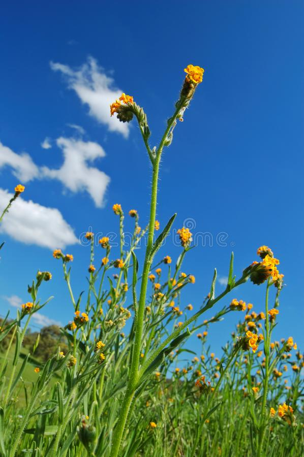 Download Mighty Flower In Springtime Stock Image - Image: 676473